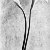 Tina Modotti Calle 1927